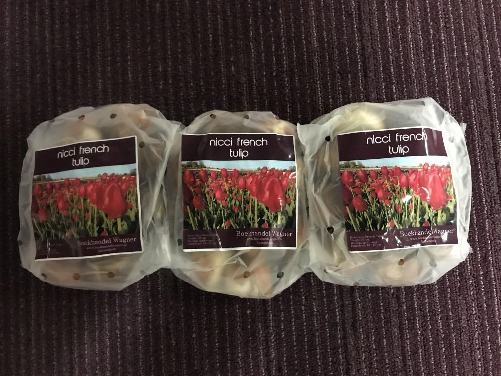 Nicci French Tulpen - Drie zakjes