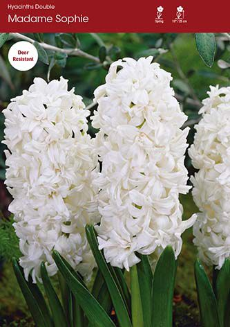 http://plugin.myshop.com/images/shop5058400.pictures.00620.JPG