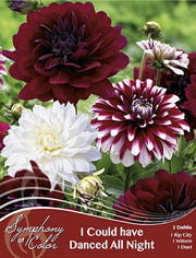 http://plugin.myshop.com/images/shop5058400.pictures.Dahlia_mix_I_Could_have_danced_all_night.JPG