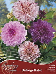 http://plugin.myshop.com/images/shop5058400.pictures.Dahlia_mix_Unforgettable.JPG