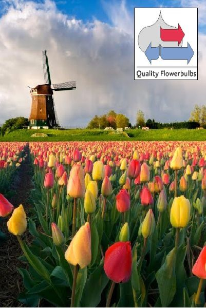 http://plugin.myshop.com/images/shop5058400.pictures.SBE_Molen_.JPG