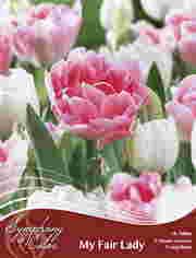 http://plugin.myshop.com/images/shop5058400.pictures.SOC_f_my_fair_lady.JPG
