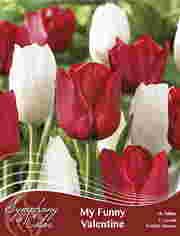 http://plugin.myshop.com/images/shop5058400.pictures.SOC_f_my_funny_valentine.JPG