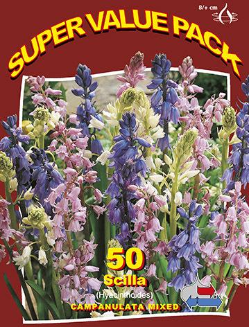 http://plugin.myshop.com/images/shop5058400.pictures.SVP_scilla_campanulata.JPG