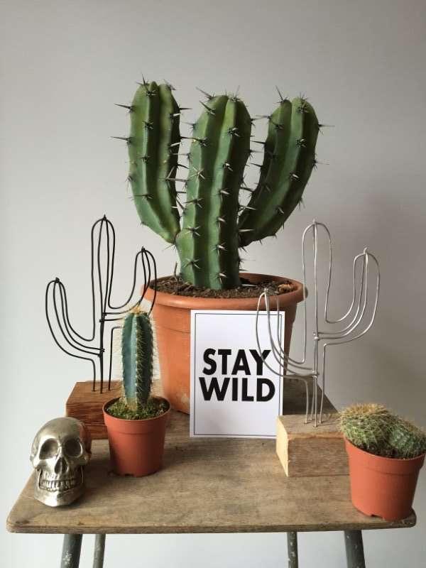 Cactus zwart mini hardhout